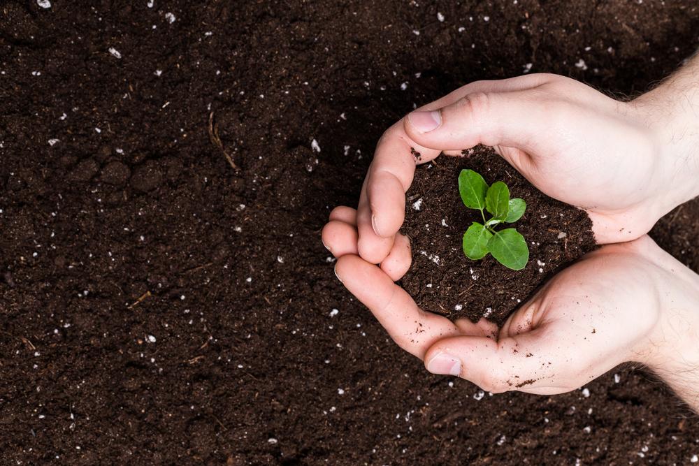 contenir plantes