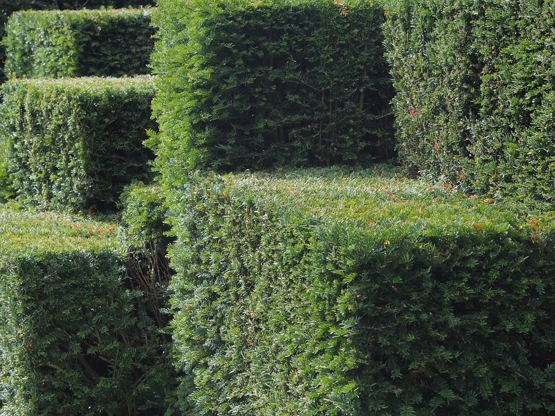 le-mur-vegetal