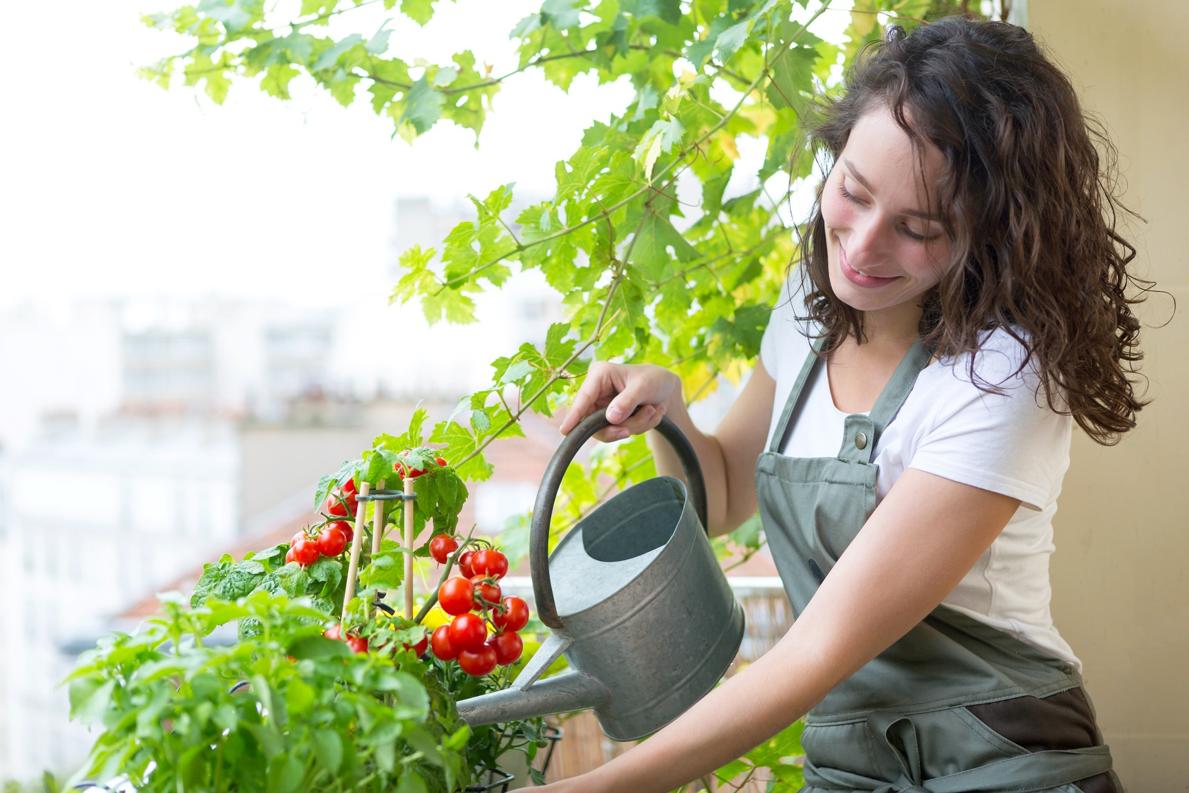 cultures en pot légumes