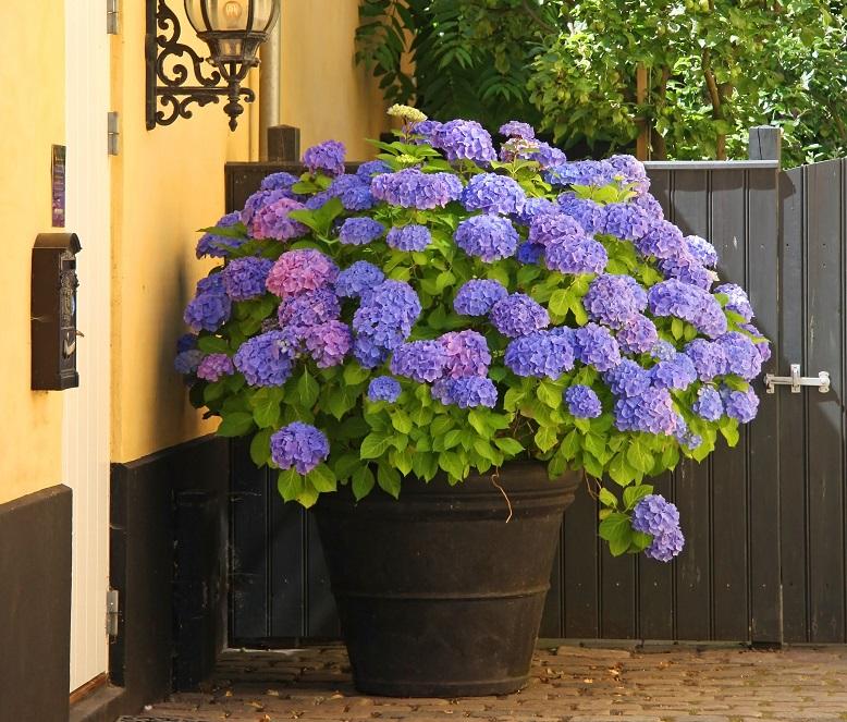 fleur en pot d'extérieur