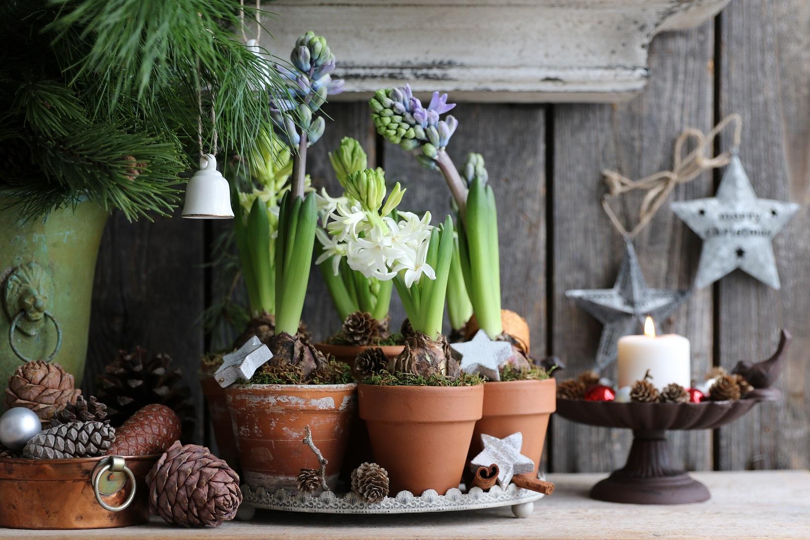 fleurs en pot d'intérieur