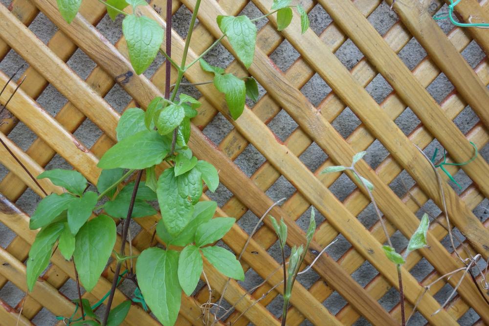 installer un treillage de jardin