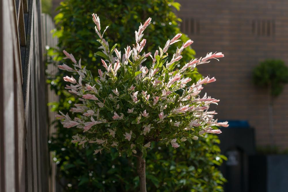 arbre pour petit jardin